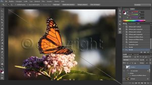 creare un watermark con Photoshop